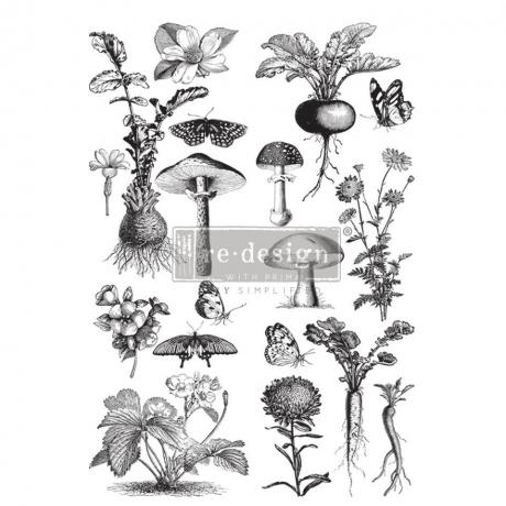 Siirdepilt Fungi Forest