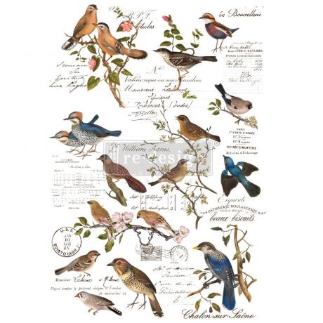 redesign_with_prima_transfeer_Postal_birds.jpg