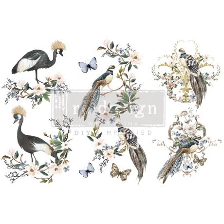transfer-rare-birds.jpg