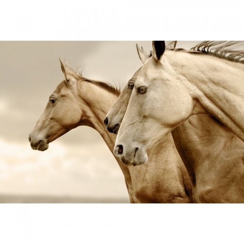 MINT dekupaaźipaber Sepia horses